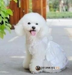 PETOP Biele šaty Candy pre fenky XS