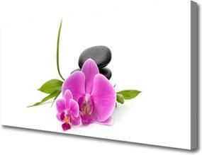 Obraz Canvas Kvet Kamene Rastlina