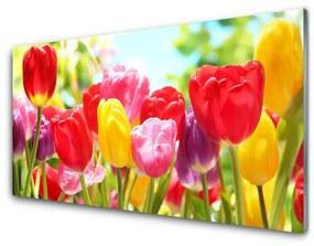 Sklenený obklad Do kuchyne Tulipány kvety rastlina 100x50cm