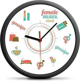 Biologické hodiny ženy
