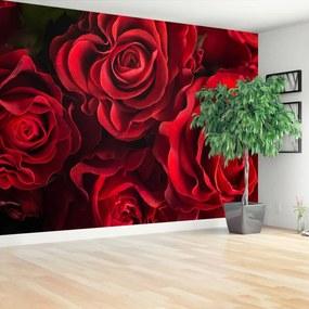 Fototapeta červené ruže