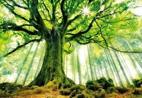 Vliesové fototapety, rozmer 366 x 254 cm, strom v lese, W+G 00977
