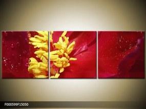 Obraz na plátne Červený kvet, Štvorec 50x50cm 33.68 €
