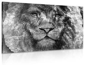 Obraz tvár leva v čiernobielom prevedení