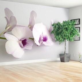 Fototapeta biele orchidey
