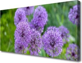Obraz Canvas Fialové Kvety Lúka