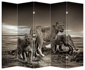 Paraván - Čiernobieli levy (225 x 180 cm)