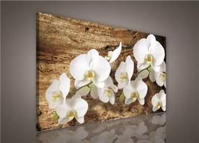 Obraz na plátne, rozmer 75 x 100 cm, biela orchidea na dreve, IMPOL TRADE PP414O1