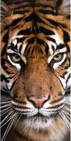 Jerry Fabrics Osuška Tiger, 70 x 140 cm