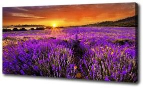 Foto obraz canvas Pole levanduľa pl-oc-100x50-f-66255723