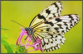 Zelený koberec Oyo home Butterfly, 140 x 220 cm
