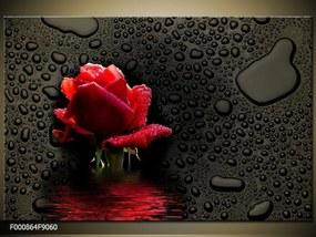 Obraz na plátne Kvet ruže, Obdĺžnik 90x60cm 60,8 €