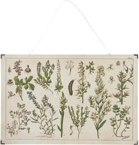 IB LAURSEN Botanický obraz Legume 60 x 40 cm