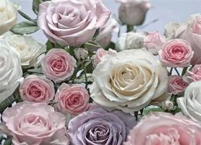Fototapety, rozmer 368 x 254 cm, ruže, Komar 8-736
