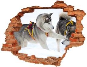 Samolepiaca nálepka na stenu Husky zima nd-c-56011790