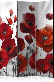 Paraván - Poppies in the Moonlight [Room Dividers] 135x172 7-10 dní