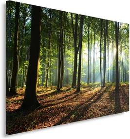 CARO Obraz na plátne - The Sun'S Rays In The Forest 120x80 cm