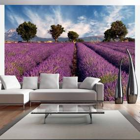 Fototapeta - Lavender field in Provence, France 400x309