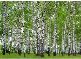 AG Art Fototapeta XXL Brezový háj 360 x 270 cm, 4 diely