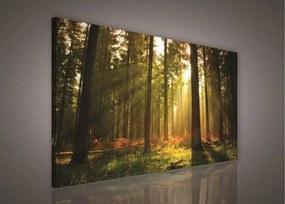Obraz na plátne, rozmer 100 x 75 cm, les, IMPOL TRADE PP204O1