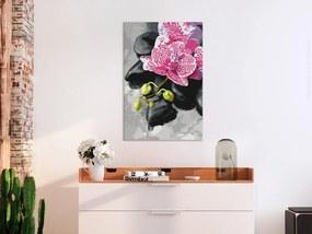 Obraz maľovanie podľa čísiel orchidea v ružovom - Pink Orchid