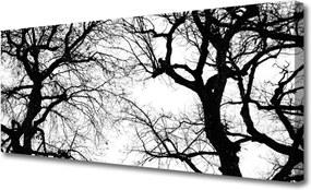 Obraz Canvas Stromy Príroda Čiernobiely