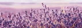 Dekor Fineza Velvet fialová Lavanda 25x73 cm lesk DLAVANDA