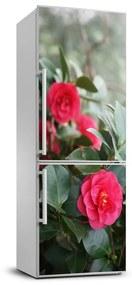 Nálepka fototapety na chladničku Kamélie FridgeStick-70x190-f-99414175