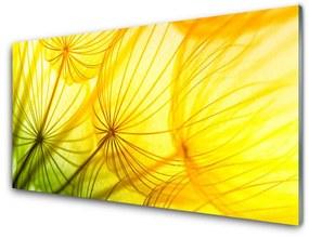 Sklenený obklad Do kuchyne Púpavy kvety príroda 100x50cm