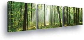 GLIX Obraz na plátne - Forest Glow II 3 x 25x25 cm