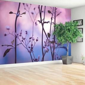 Fototapeta fialové púčiky