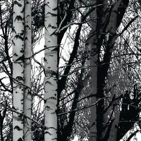 Samolepiace fólie brezy, metráž, šírka 45cm, návin 15m, d-c-fix 200-3197, samolepiace tapety