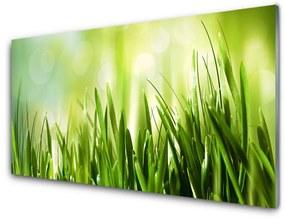 Nástenný panel Tráva príroda 125x50cm