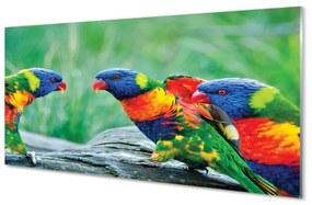 Nástenný panel Farebný papagáj stromu 125x50cm