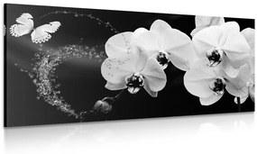 Obraz čiernobiela orchidea a motýľ