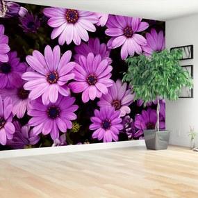 Fototapeta fialové kvety