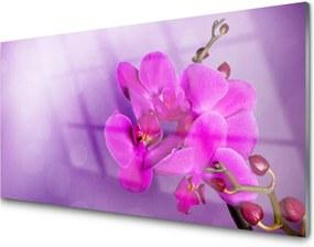 Sklenený obklad Do kuchyne Kvety Plátky Orchidea