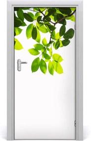 Fototapeta na dvere  Zelené lístie