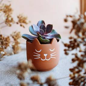 sass & belle Terakotový obal na kvetináč Cat's Whiskers Mini