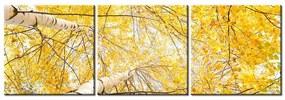 Tlačený obraz Brezy v jeseni 90x30cm 1197A_3A