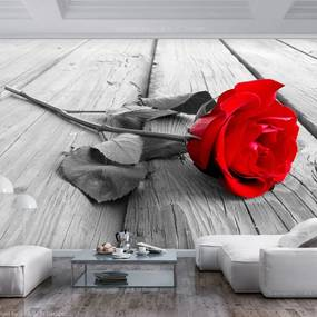 Fototapeta - Abandoned Rose 200x140 + zadarmo lepidlo
