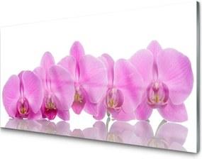 Sklenený obklad Do kuchyne Ružová Orchidea Kvety