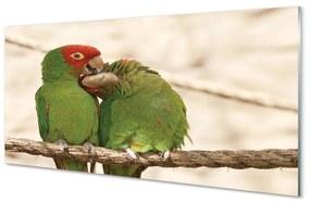 Nástenný panel zelené papagáje 120x60cm