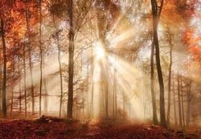 Vliesové fototapety, rozmer 104 x 70,5 cm, les na jeseň, IMPOL TRADE 10471 VEM