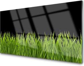 Obraz plexi Zelená Tráva Príroda