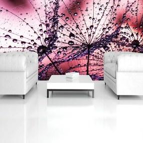 Fototapeta - Púpavy - abstraktné - fialové (152,5x104 cm), 10 ďalších rozmerov