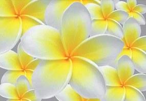Vliesové fototapety, rozmer 312 x 219 cm, žlté kvety, IMPOL TRADE 033VE