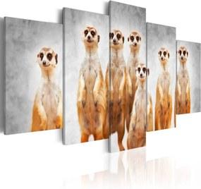 Obraz - Meerkats 200x100