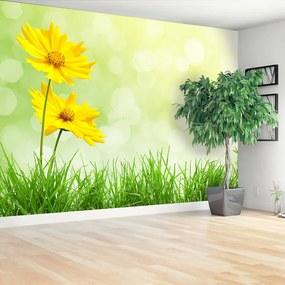 Fototapeta Vliesová Žlté kvety 416x254 cm