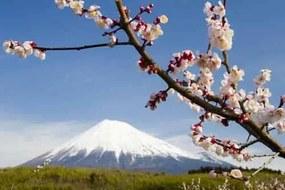 Fototapety, rozmer 368 x 254 cm, japonská sopka s kvety, IMPOL TRADE 8-006